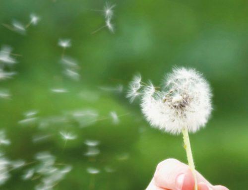 Vom grossen Glück, Dankbarkeit zu empfinden…